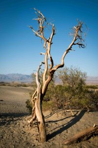 Roadtrip désert montagne route Californie Mesquite flat dunes Las Vegas Los Angeles San Francisco blog carnet de voyage