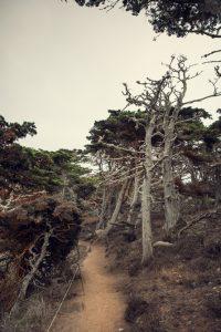 Point Lobos Californie hollywood Death valley vallée de la mort Las Vegas Los Angeles San Francisco blog carnet de voyage